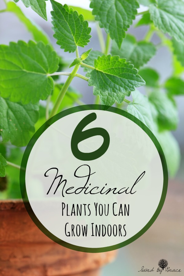 6 medicinal plants you can grow indoors- These 6 easy to grow medicinal plants are perfect to grow indoors no matter what season it is.