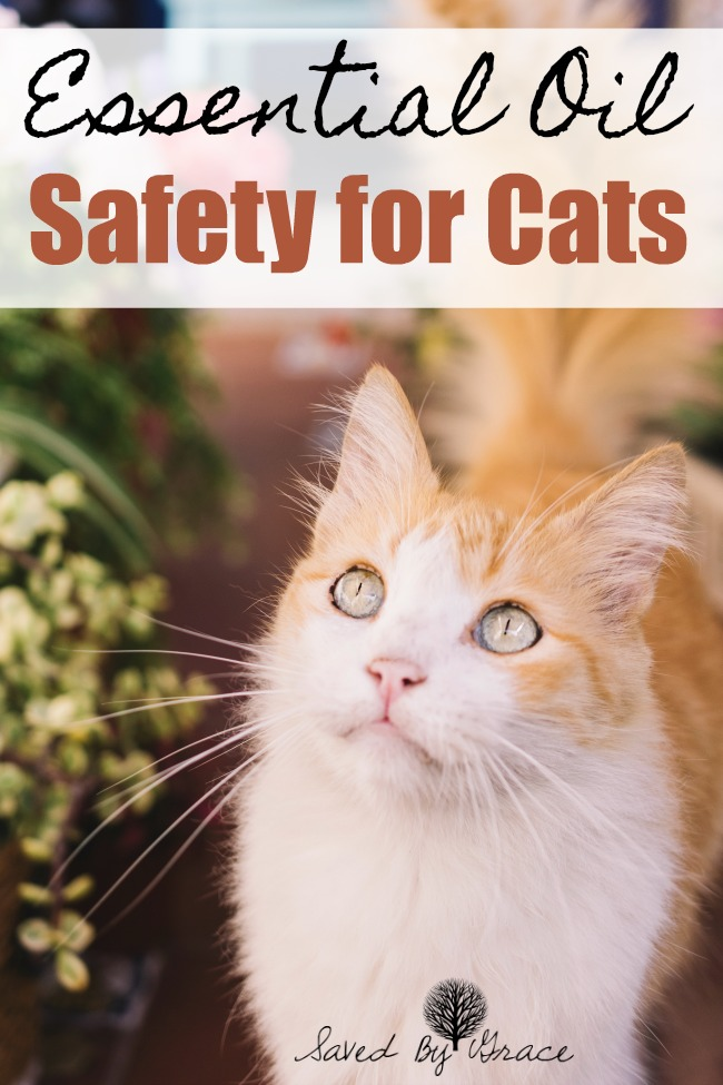 Essential Oil Safety Around Cats- As much as most of us love essential oils, caution should be used around our feline friends. Here are some essential oil safety tips for cat owners as well as safe essential oils to use around your cat.